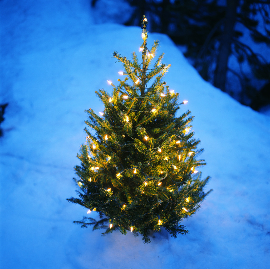 Harford County Christmas tree farms - Bel Air News & Views