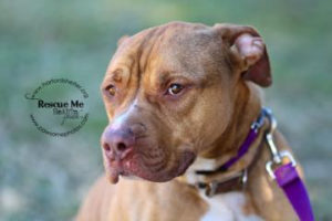 Ricco the American Pit Bull Terrier mix, Ally the cat and a a ring-necked parakeet named Shreck are Pets of the Week at the Humane Society of Harford County