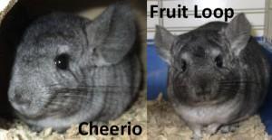 Cheerio & Fruit Loop