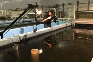 Bel Air tilapia and lettuce facility to be featured on Maryland Public Television series Dec. 6